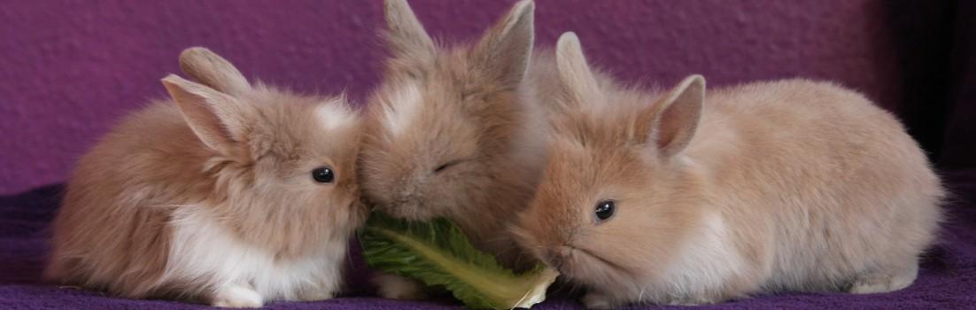 rabbit-426131_1920
