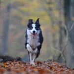 autumn-665150_1280